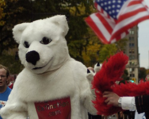 PolarBear-American-Flag-Site-Sized-500x400